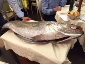 il pesce, fresco e grosso