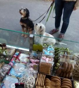 Dog Sweet Dog